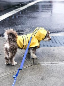 Sully raincoat